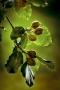 ARPS Flora Panel 3 Image-11