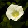 ARPS Flora Panel 3 Image-14