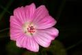 ARPS Hedgerow Flora-1