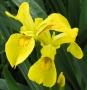 ARPS Hedgerow Flora-11