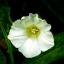 ARPS Hedgerow Flora-13