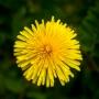 ARPS Hedgerow Flora-15