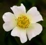 ARPS Hedgerow Flora-3