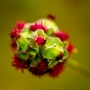 ARPS Hedgerow Flora-4