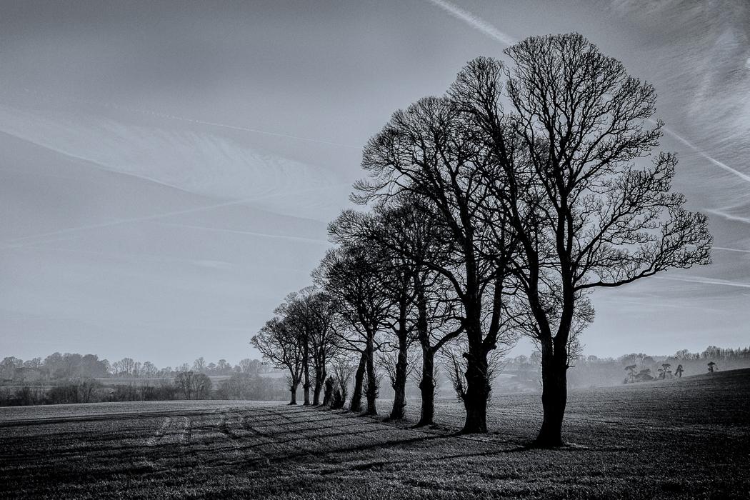 Kells Trees in the Morning Mist