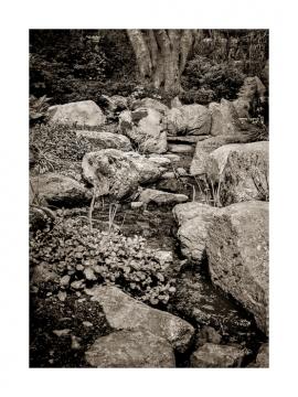 Lafcadio Hearn Gardens #1