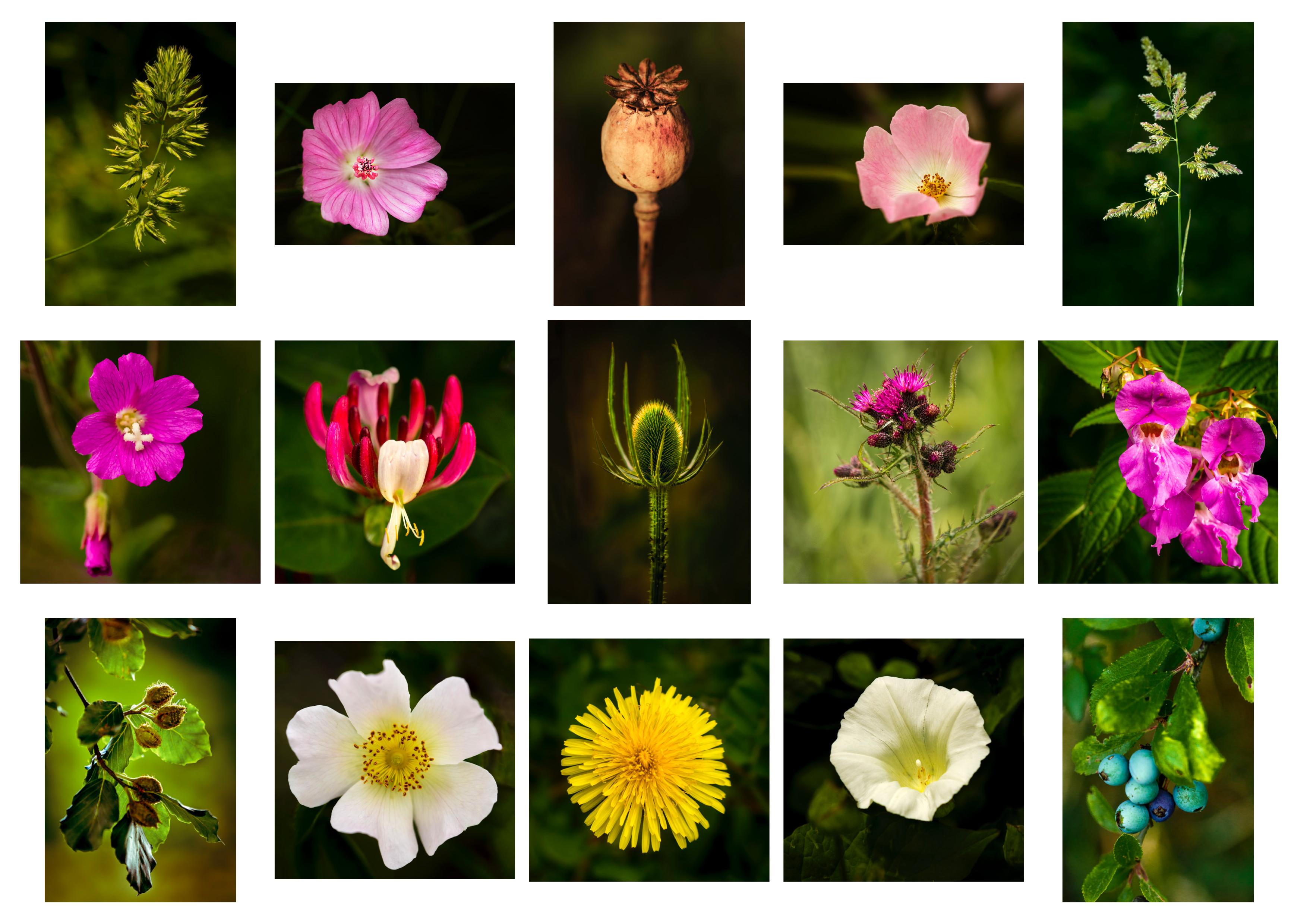 ARPS Hedgerow Flora Panel 2